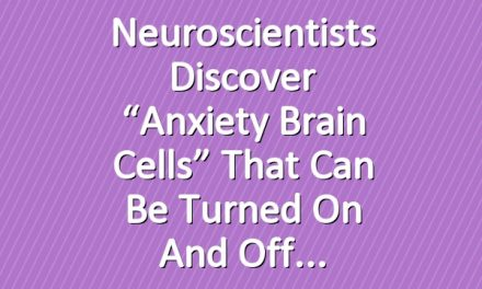 """Neuroscientists Discover """"Anxiety Brain Cells"""" That Can Be Turned On and Off"""